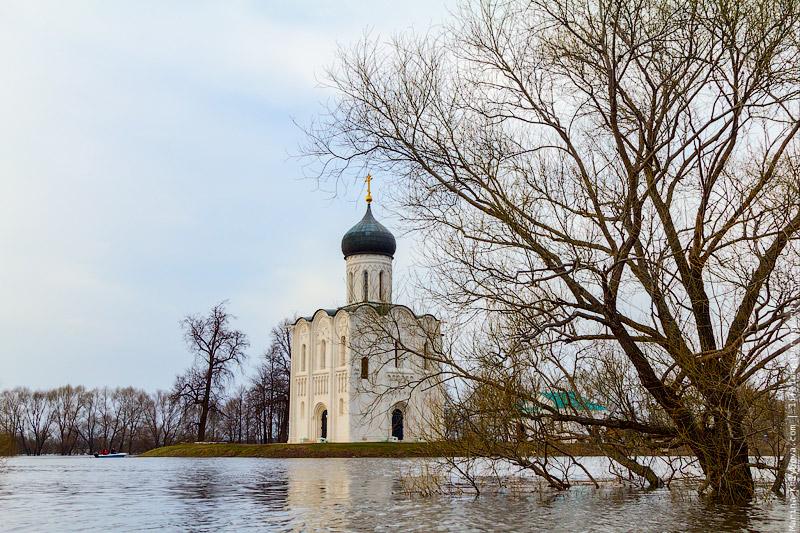 Церковь Покрова на Нерли и подтопленное дерево