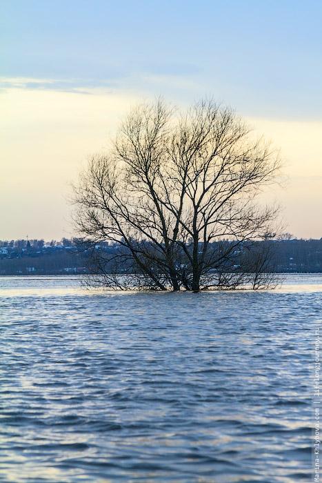 Дерево на заливном лугу в разлив