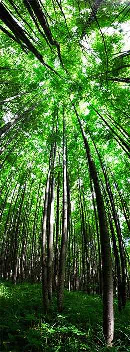 Лес у Бунчихи