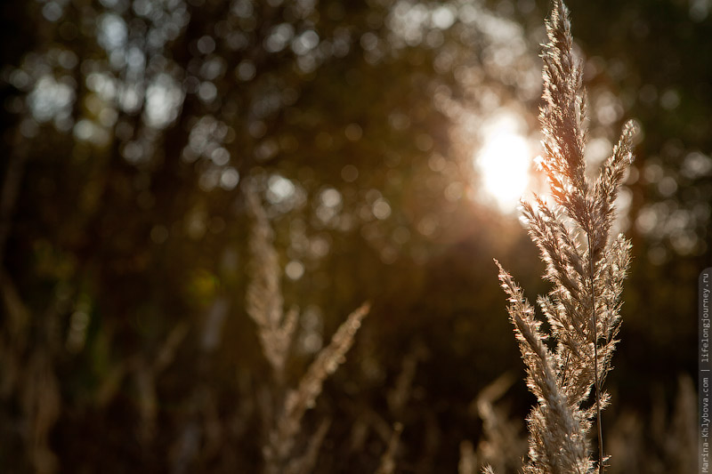 Солнечная осень