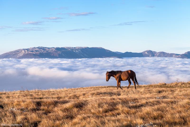 Лошадь в Крыму