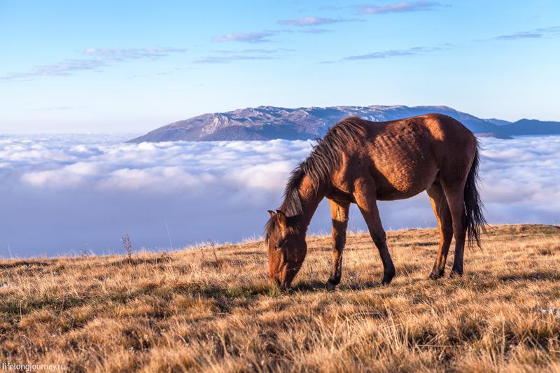Лошадь на фоне облаков