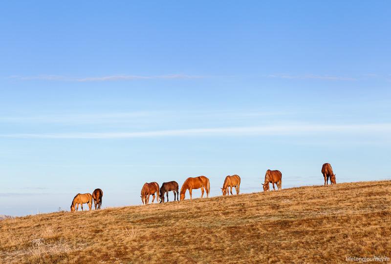 Лошади на фоне неба