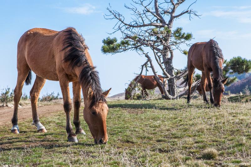 Лошади едят