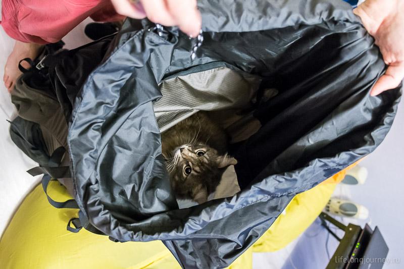 Рюкзак достойный - кошка подтверждает!
