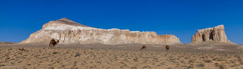 Шеркала и верблюды